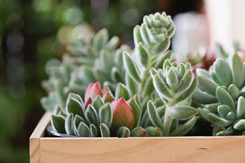 succulentbox_1_web
