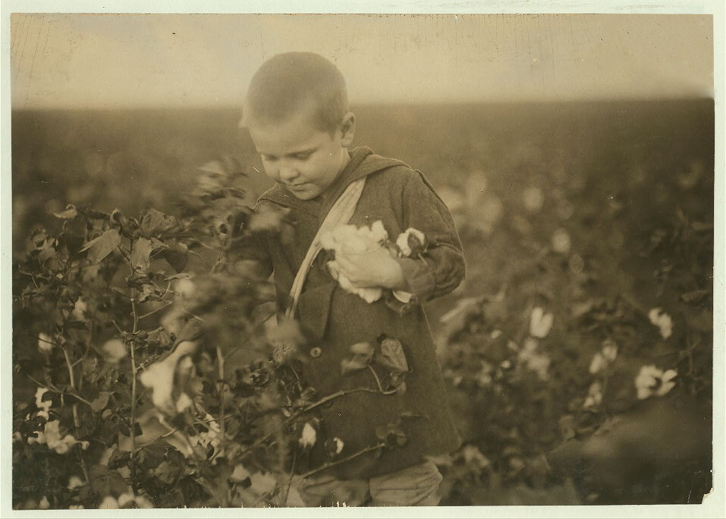 Four year old cotton picker. Children come out to this farm from the town to pick cotton outside of school hours. Ages range from four and six years (ages of the two youngest boys who pick regularly) up to fifteen and more. Two adults. Location: Waxahachie [vicinity], Texas.