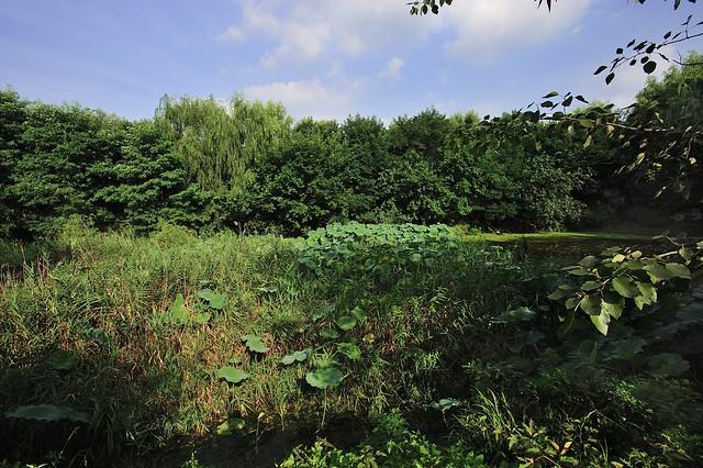 濕地(Wetland)