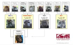 Gorilla Family - Columbus - Oliver's Group