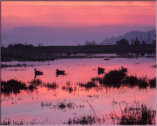 Finally, I got up early enough to catch a sunrise in the Corte Madera marsh.