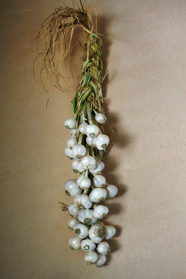 stills, bits + pieces, garlic, garlic braid, diy, homegrown, garden, veggies