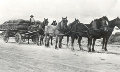 vehicle, pack animal, herd, coachman, horse harness, carriage,