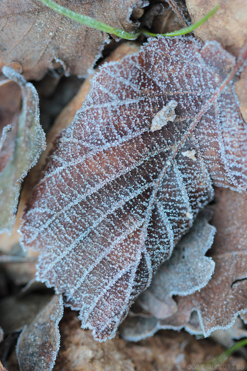 more winter beauty