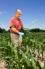 Sun, 09/21/2003 - 10:48 - U.S. Department of Agriculture (USDA) Agricultural Research Service (ARS) plant pathologist Hamed Abbas applies the nontoxigenic Aspergillus flavus formulated in bioplastic granules to knee-high corn on Sept. 21, 2003. USDA photo by Peggy Greb.