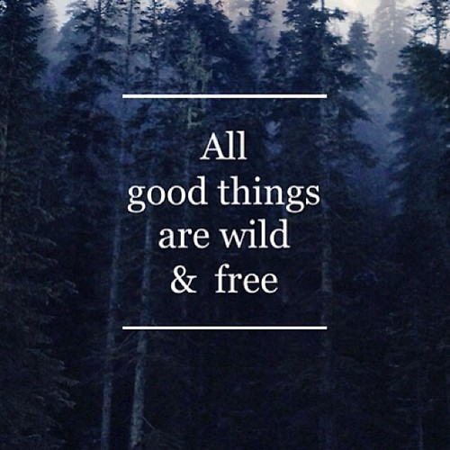 All good things are wild & free #wildthing