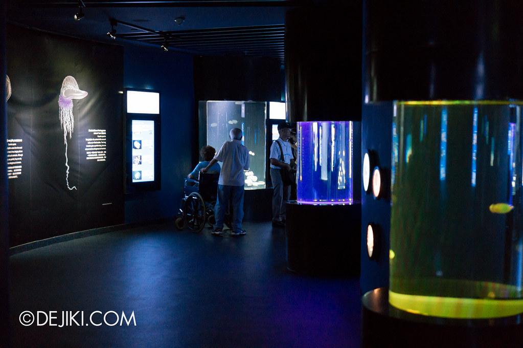 S.E.A. Aquarium - Sea Jelly area