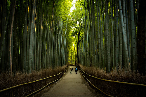 the path of bamboo, revisited #20 (near Tenryuu-ji temple, Kyoto)