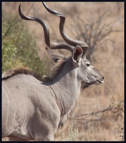 safari zuid-afrika by hans van egdom