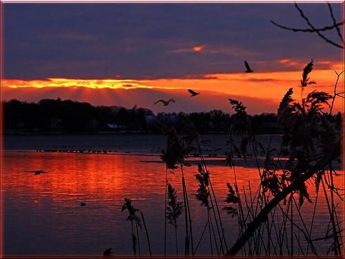 sunset sea sky water reflections see wasser himmel abendsonne spiegelungen sonnenuntergangheute
