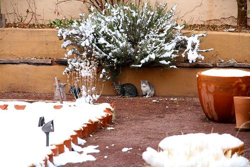 La Posada - Snow Cats