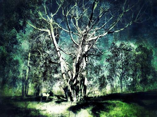 [フリー画像素材] 自然風景, 樹木 ID:201303031200