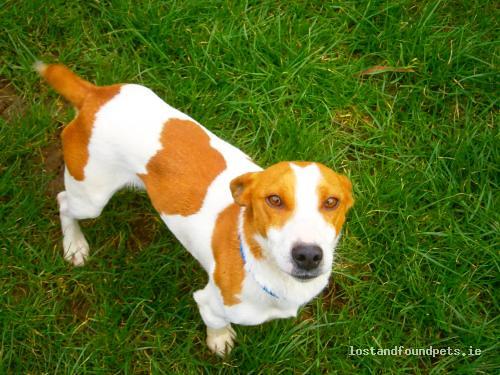 Fri, Feb 22nd, 2013 Found Male Dog - Near Garden Centre On Tralee Rd, Abbeydorney, Kerry