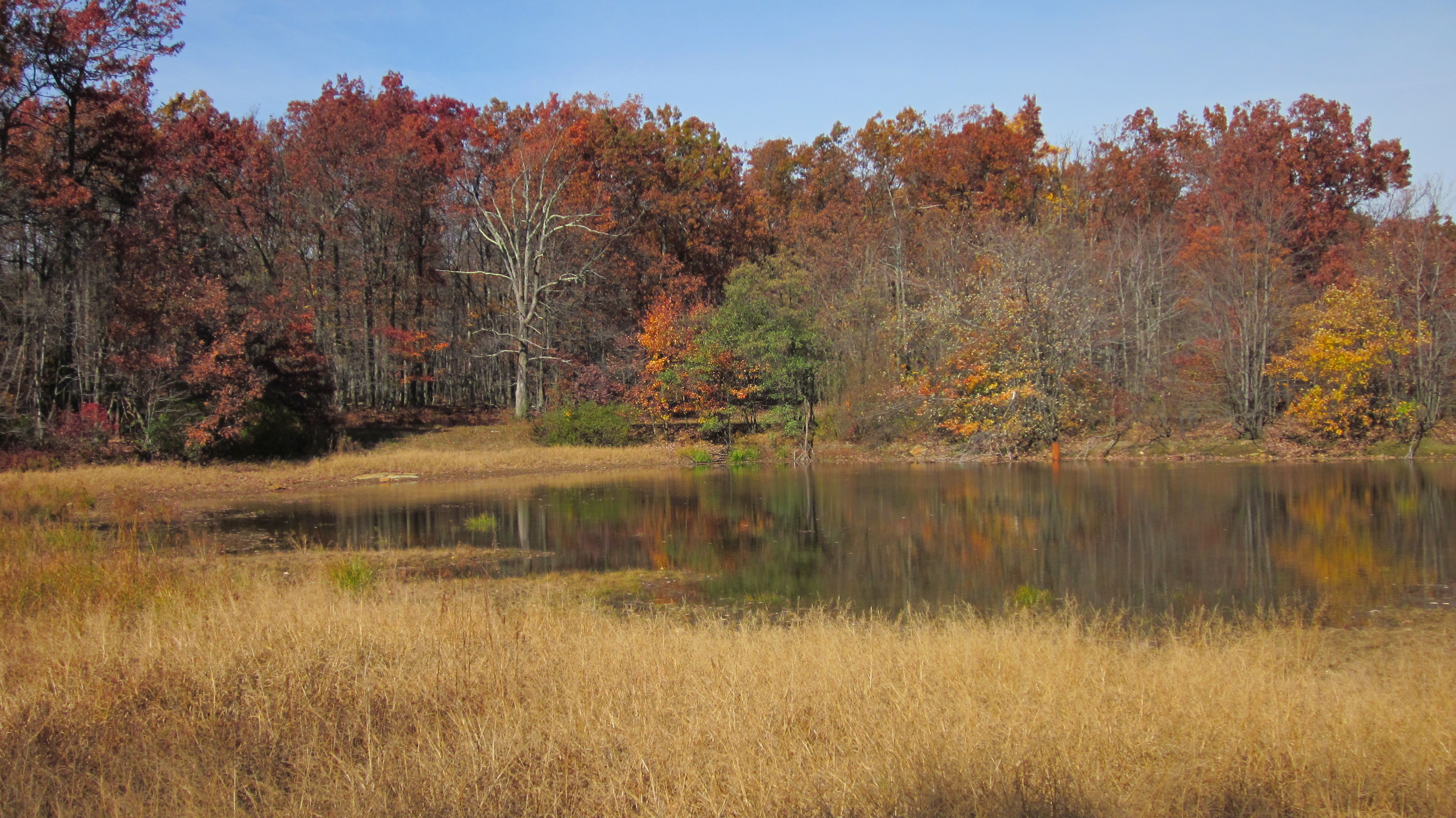 Autumn Pond Catoctin Mountain Frederick Municipal Forest