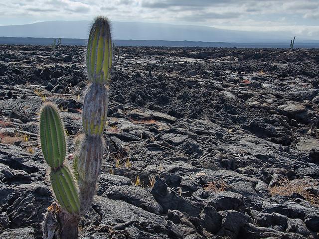 Galapagos: Isla Isabella