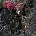 Red moss on rocks - Musgo rojo en las piedras; camino hacia San Miguel Talea de Castro, Districto Villa Alta, Región Sierra Juárez, Oaxaca, Mexico por Lon&Queta