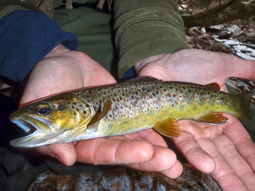 PJ's Wild Winter Browns