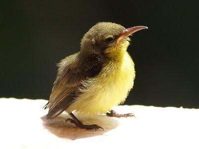 20130201_sunbird2