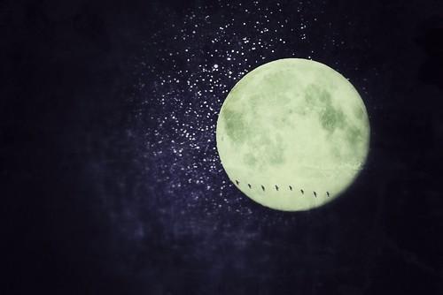 [フリー画像素材] グラフィック, フォトレタッチ, 月, 夜空, 鳥類 (その他) ID:201303200000