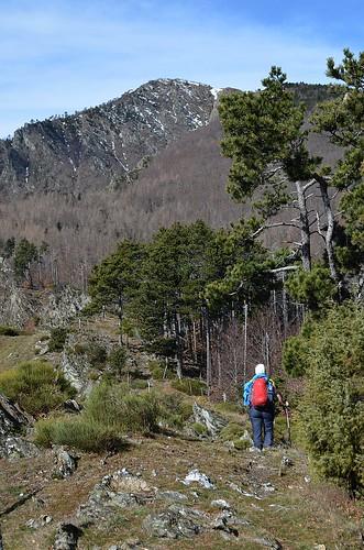 Paths of Aigoual