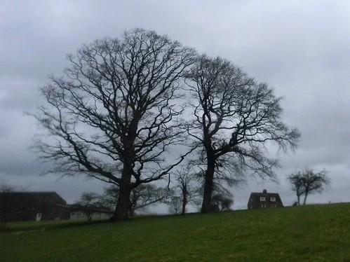 Spooky trees 2