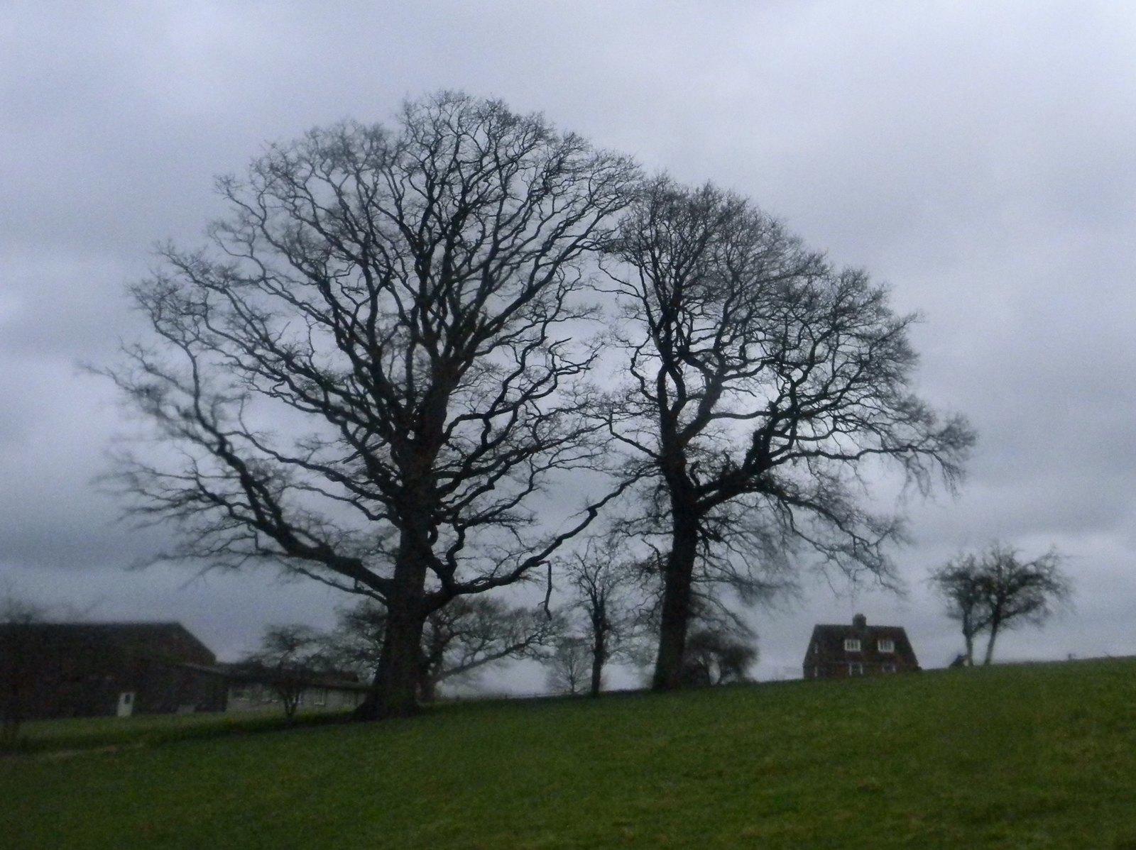 Spooky trees 2 Stonegate to Robertsbridge