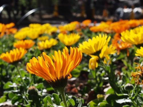 Shinjuku Royal Garden @ Spring