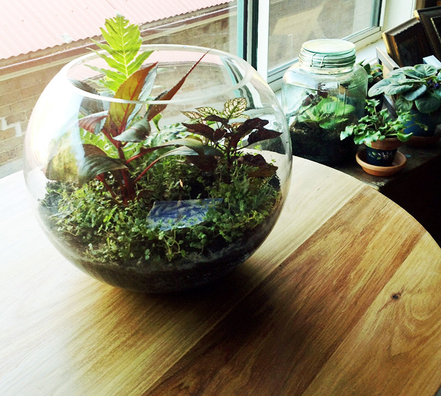 Making a Terrarium