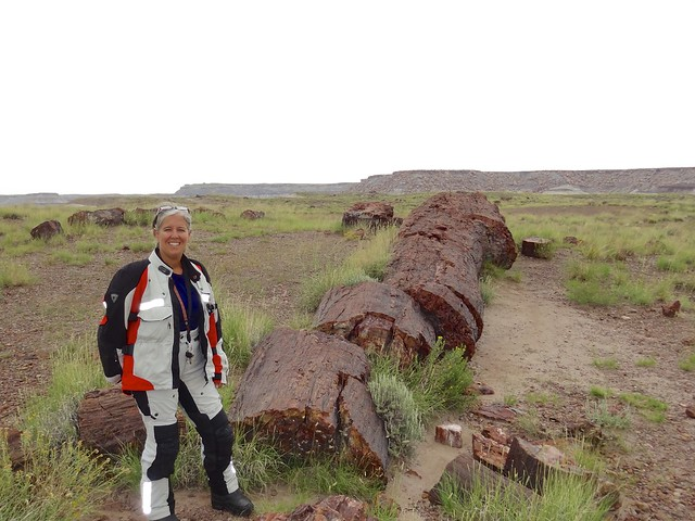sara at the petrified forrest