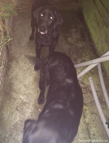 Fri, Jul 22nd, 2016 Found Male Dog - Umberstown, Trim, Meath