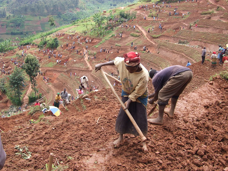 Women and men in northern Rwanda work on a public works site, building terraces to prevent soil erosion