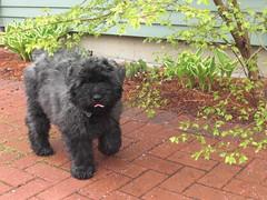 Puppy George