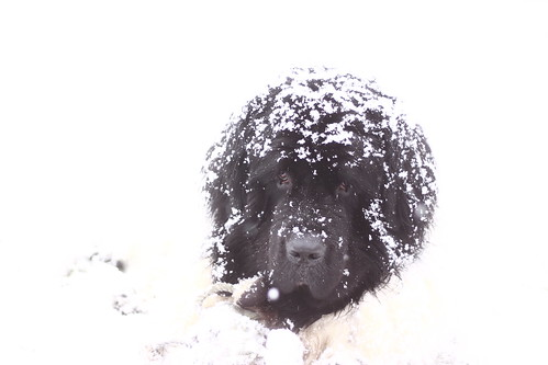 Usko the snowman! -Explore-