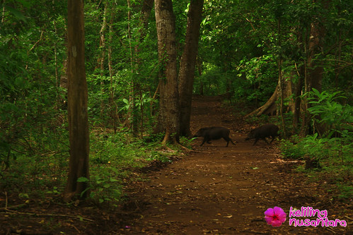8405245142 2f5345d106 Alas Purwo National Park