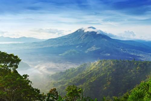 Крупнейший производитель бумаги остановит вырубку индонезийских лесов