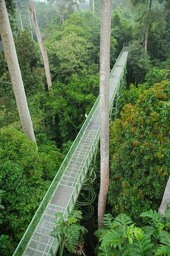 Rainforest Discovery Centre, Sabah