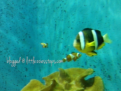 Clown Fish at Manila Ocean Park