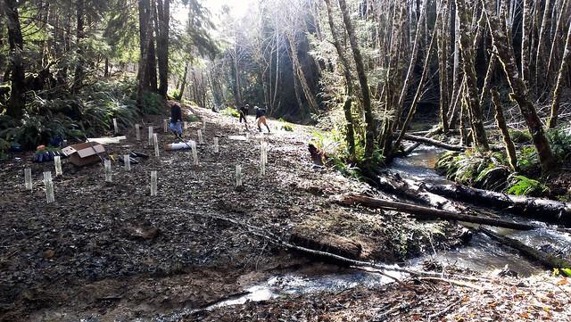 Mabel Creek Restoration