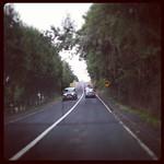 Camino a Panguipulli