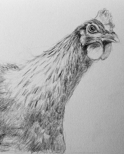 Drawing of a chicken (unfinished)
