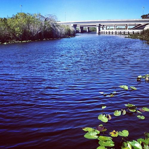 Beautiful. #florida #everglades #igersftl