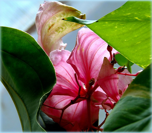 Exotic Beauty / Happy Quinta Flower for you !