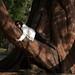 Tree Hugger by Karyn Stepien Photography