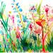 Wildflowers_CarlaS._flckrGroup