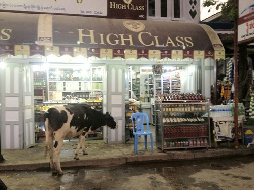 "now that is one ""high class"" cow"