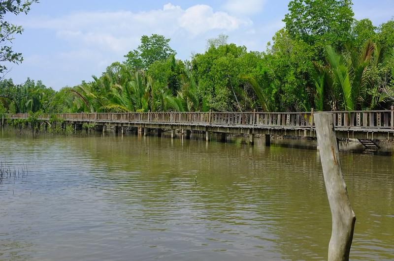 Mangrove 11