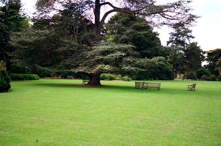 4 picnic tree