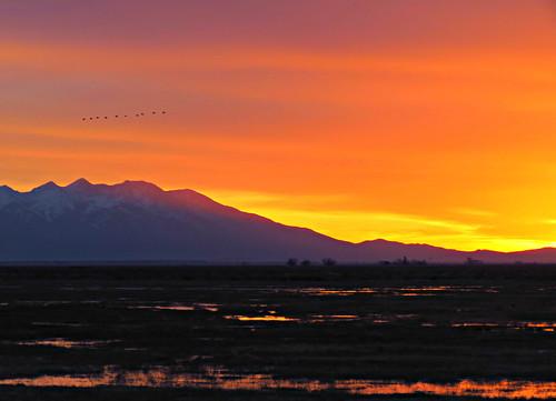 morning sky usa mountains bird birds america sunrise landscape us flying colorado unitedstates aves cranes sanluisvalley american wetlands rockymountains montagnes mountainrange sangredecristomountains southerncolorado sandraleidholdt leidholdt