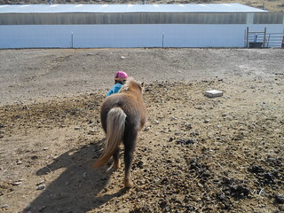 Horse Lessons 15Mar13- Catching Meggie (8)