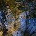 Reflet de branches...!!! by Denis Collette...!!!